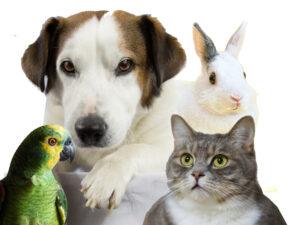 Solicite orçamento de serviço funerário para o seu animal